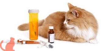 Как проявляется у кошек рак лимфатической системы