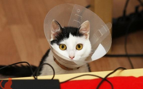 Что такое кастрация кота и когда она нужна