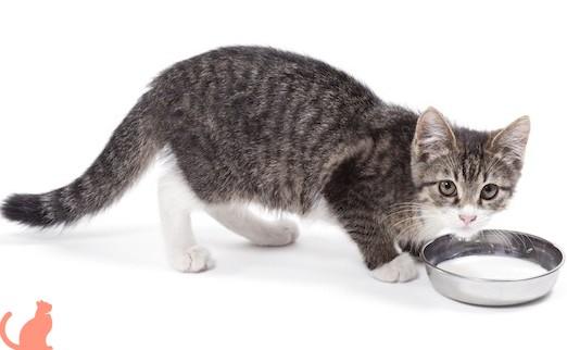 Что такое кастрация кота и когда она нужна?