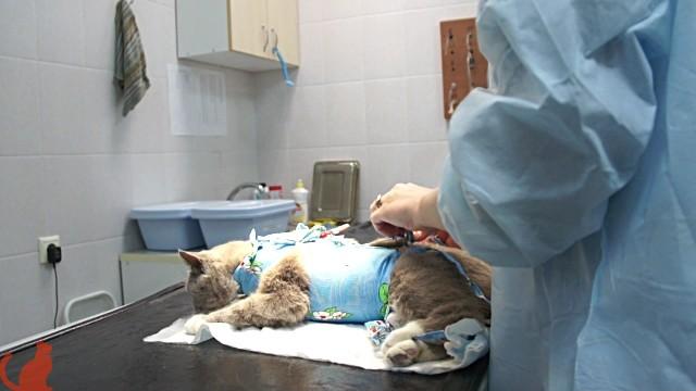 кошка на операциооном столе