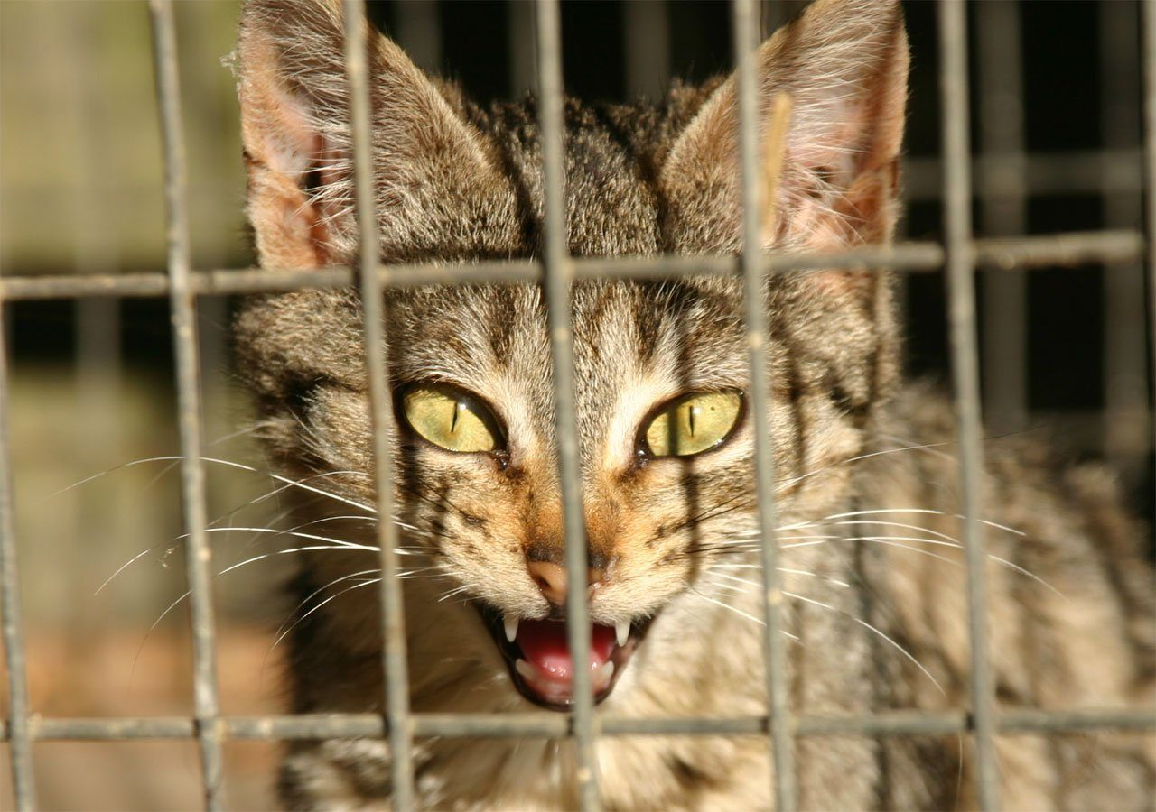 https://kotofan.ru/wp-content/uploads/cat-devil-1517788-1280x900.jpg