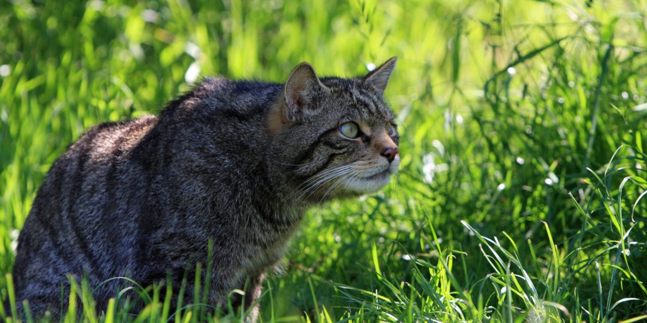 https://kotofan.ru/wp-content/uploads/cat-hunting-in-grass-1280x640.jpg