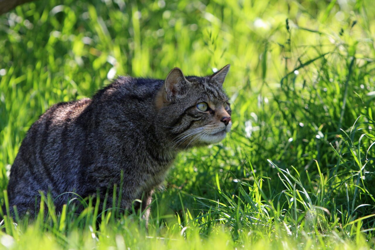 https://kotofan.ru/wp-content/uploads/cat-hunting-in-grass-1280x853.jpg