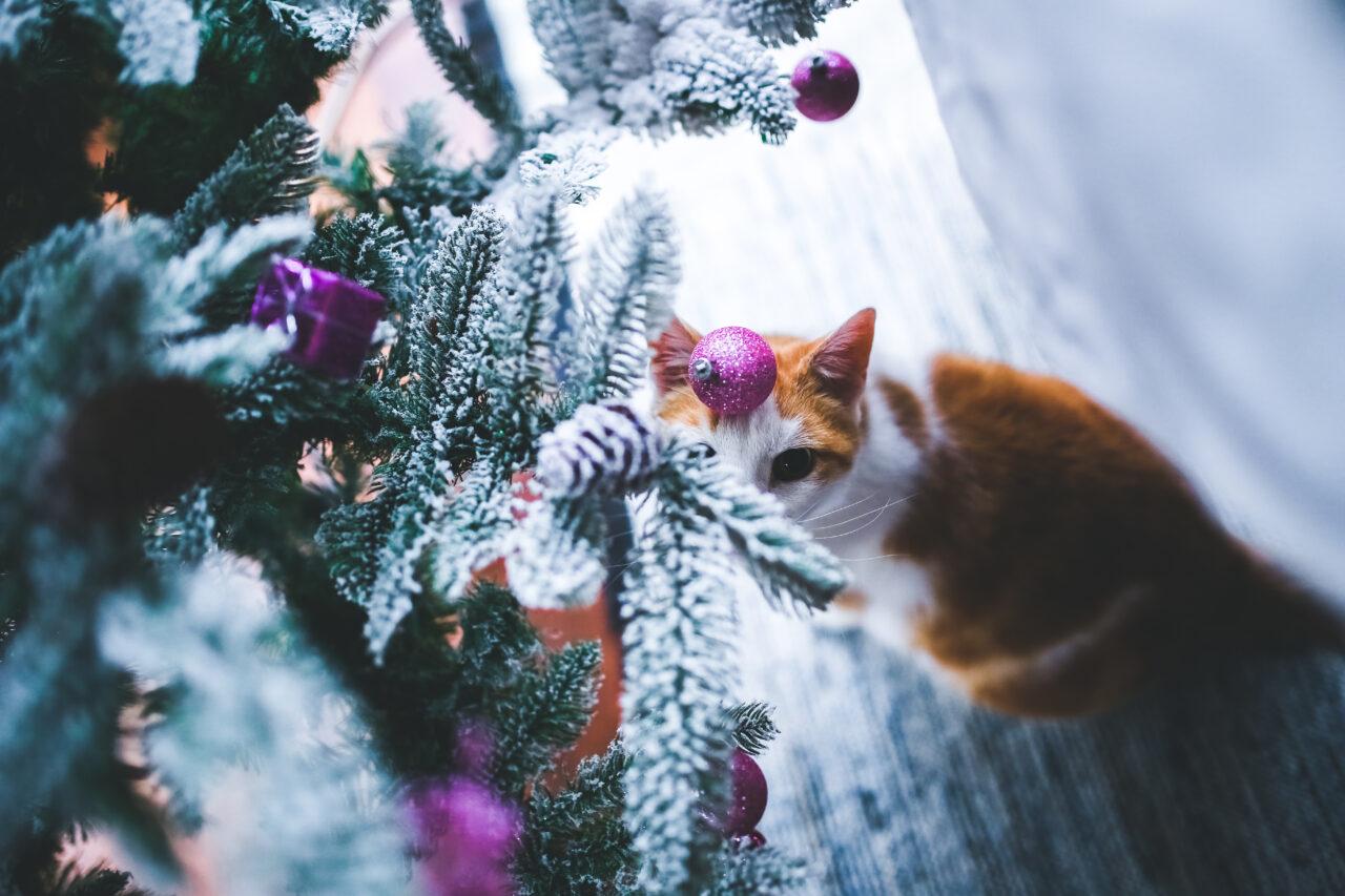 https://kotofan.ru/wp-content/uploads/cat_come_1608063590-1280x853.jpg