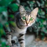 Как кошка может находить дорогу домой?