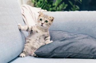 Пережит жару кошке