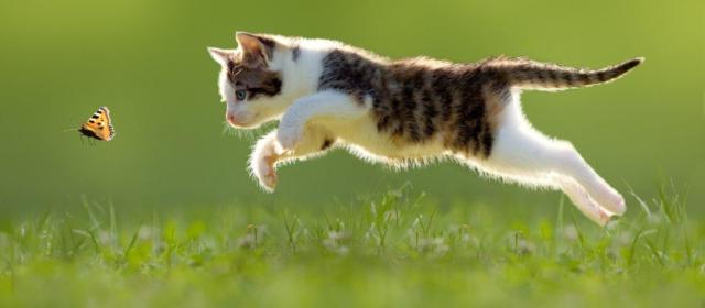 Вопросы Зоопсихологу о гулянии