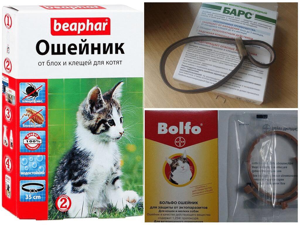 https://kotofan.ru/wp-content/uploads/image-46.png