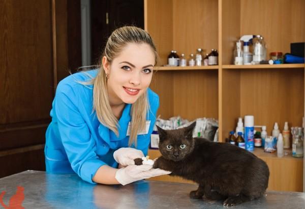 Корм для кастрированных кошек фармина thumbnail