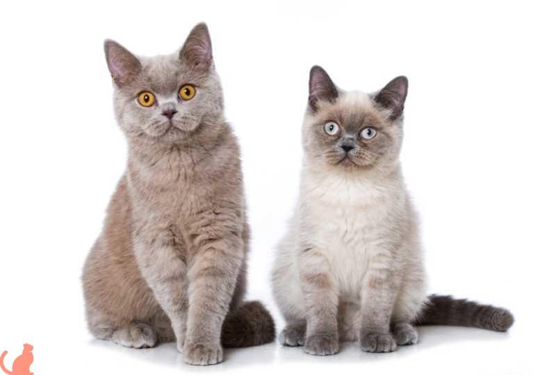 Что делать если кошка после стерилизации просит кота