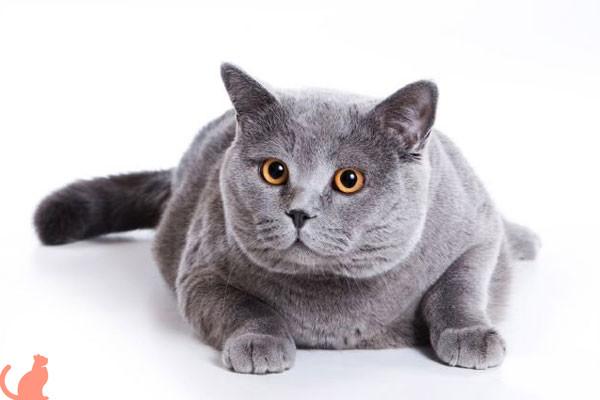 Можно ли кастрировать кота в домашних условиях