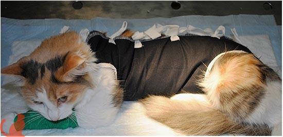 Какими могут быть последствия стерилизации кошки