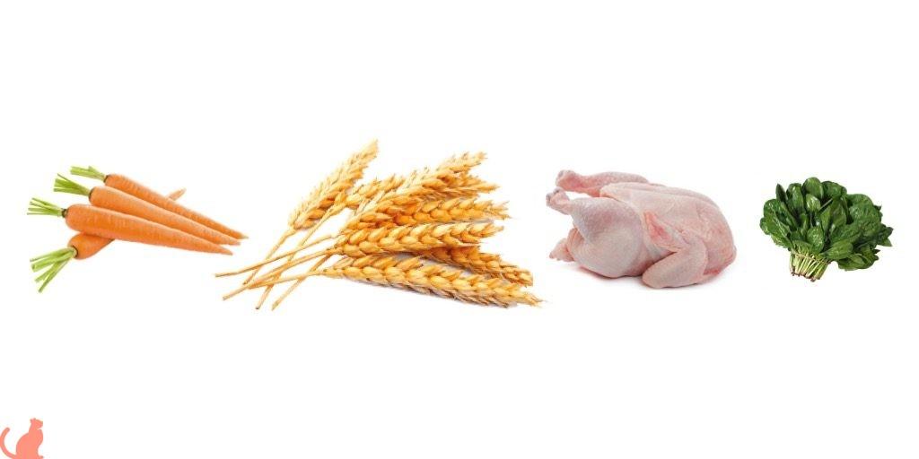 Главные отличия корма для стерилизованных кошек от обычного