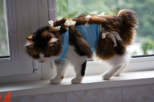 кошка в повязке