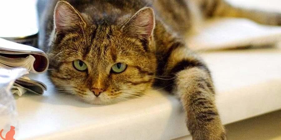 Роял канин корм для кошек кастрированных состав thumbnail