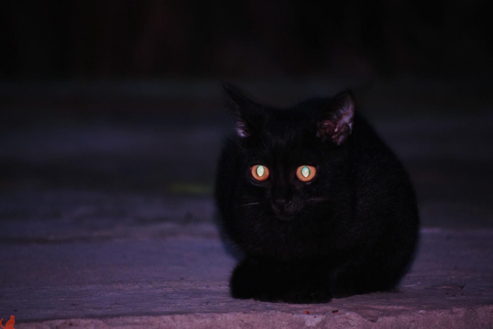 глаза кошки светятся в темноте картинки пикассо только