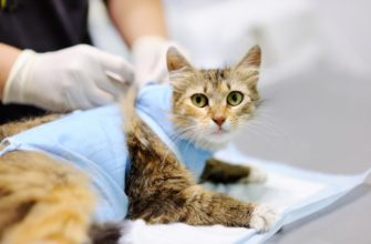 как одеть попону на кошку после стерилизации