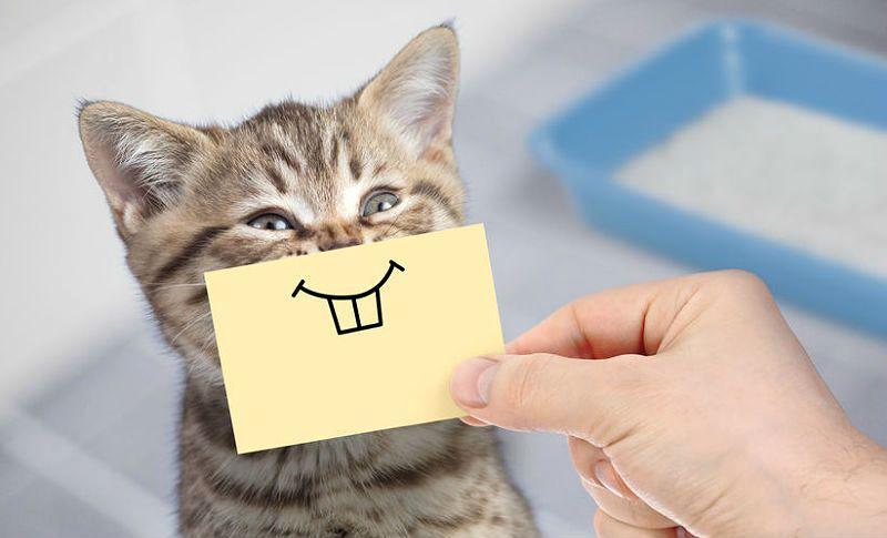 как по внешним признакам определить возраст кошки