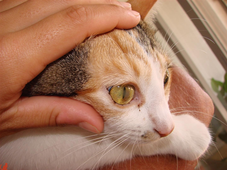 Коту поцарапали глаз чем лечить