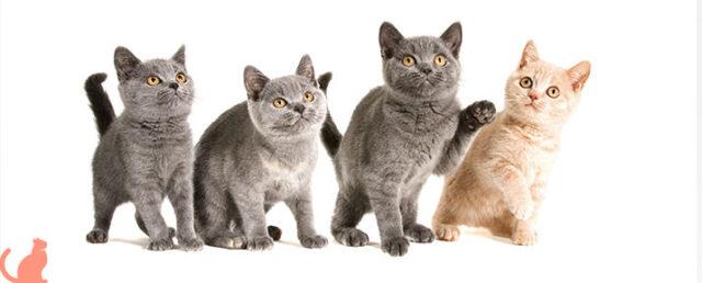 За какое время до прививки нужно глистогонить кошку