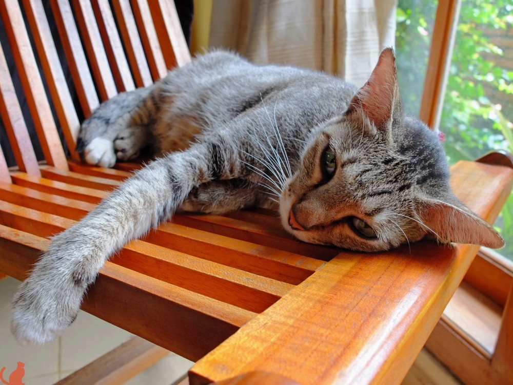 Как долго кошка будет отходить от наркоза после стерилизации