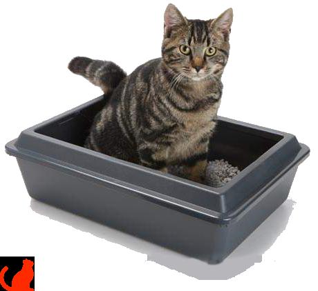 Рейтинг кормов для кастрированных котов