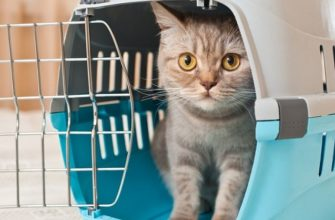 Как перевозить кошку самолетом по России