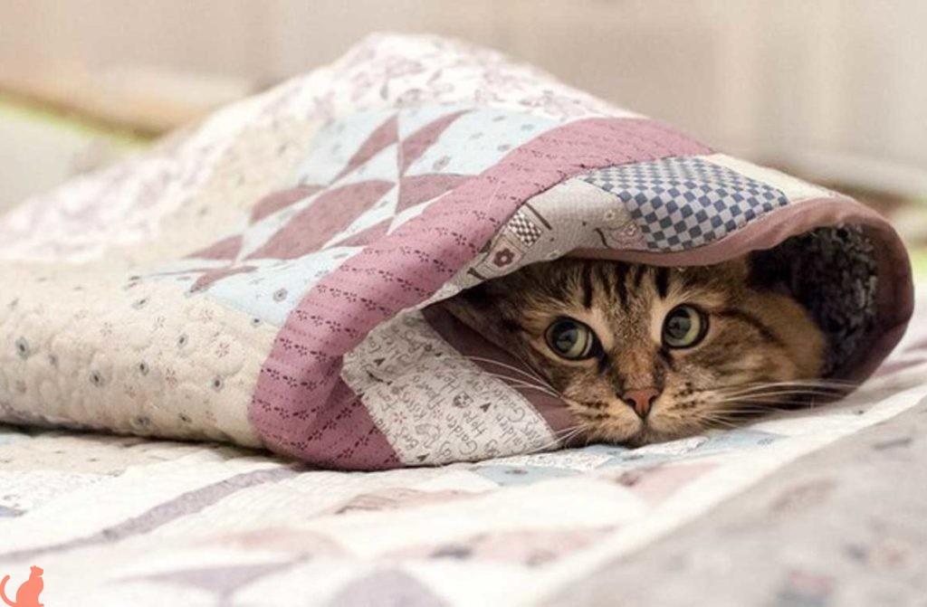 Что делать если у кота низкая температура