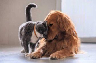 Как подружить кошку с собакой, живущих в одной квартире