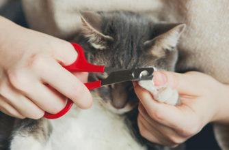 Как правильно кошке подстричь когти в домашних условиях