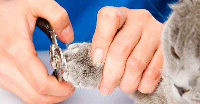 Как правильно кошке подстричь когти