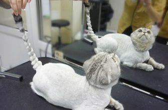 Как правильно подстричь кошку машинкой в домашних условиях