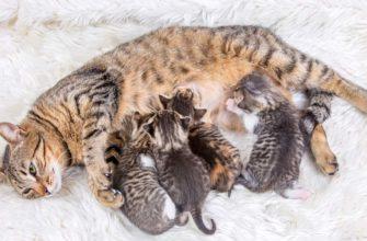 Как понять, что кошка родила всех котят в помете