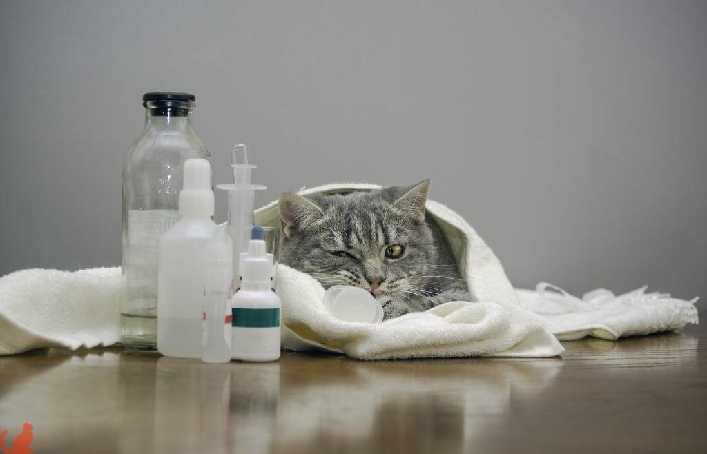 Препараты для лечения пиелонефрита