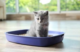 Как приучить вашу кошку к лотку в квартире