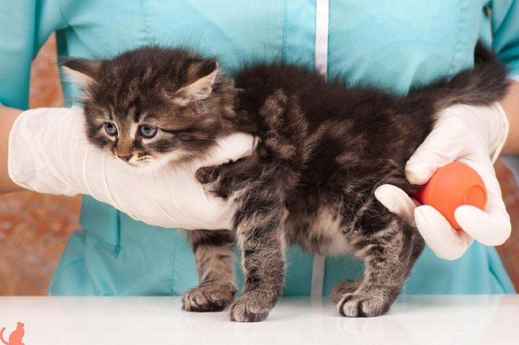 Профилактика запора у кошек