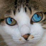 В каком возрасте у котят меняется цвет глаз