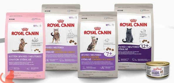 Как выбрать корм для стерилизованных кошек