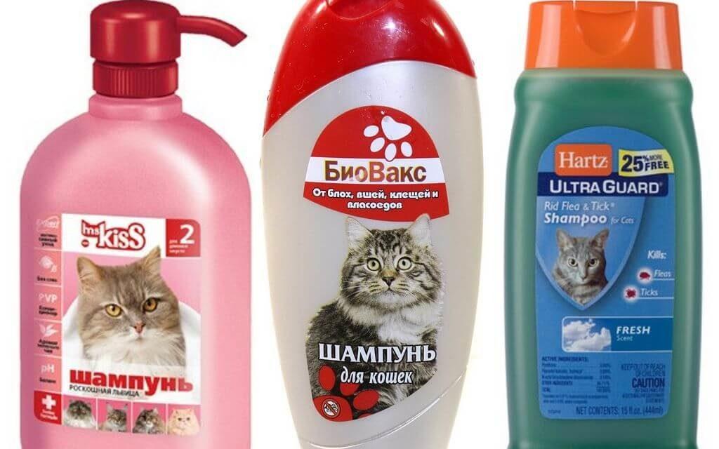 https://kotofan.ru/wp-content/uploads/shampun-ot-bloh-dlja-koshek-1024x640.jpg
