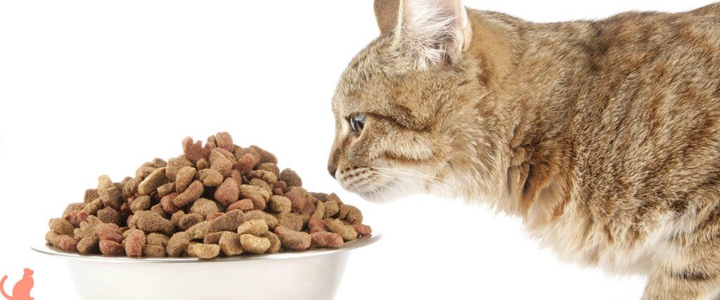 Состав корма для кошек