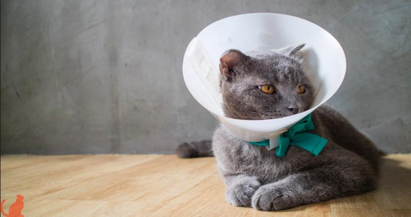 Влияние кастрации на продолжительность жизни домашних котов