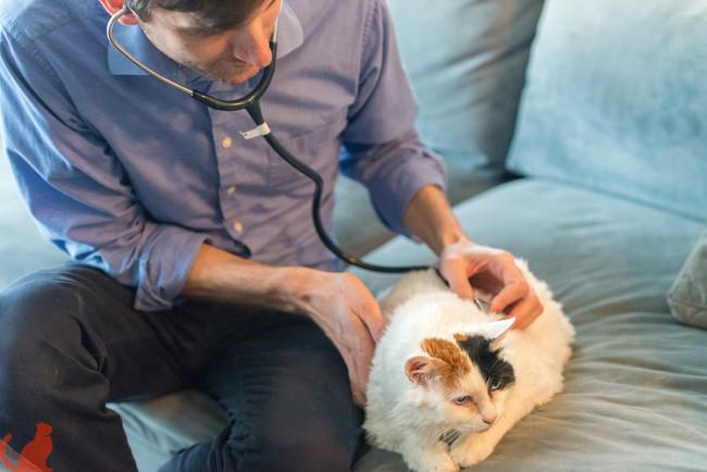 veterinarian at home